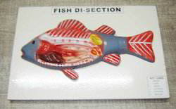 Fish Dissection Model On Board
