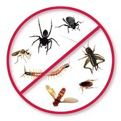 All types of Pest Control Services