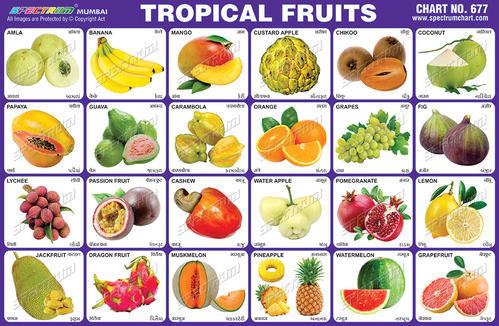 Exotic Fruits Names | www.pixshark.com - Images Galleries ...
