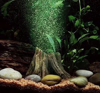 Aqua Culture Aquarium Fishes And Accessories