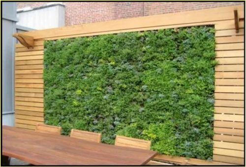 Vertical Garden Designing Services