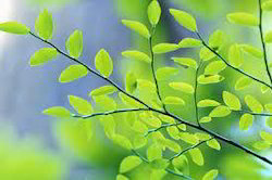 Tree Census/Inventory | Terracon Ecotech Private Limited | Service