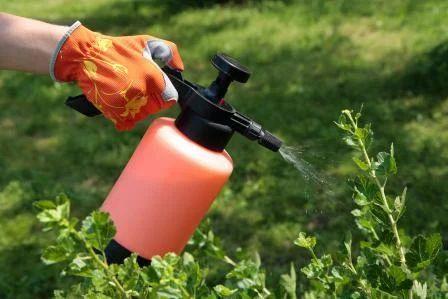Natural Pest Control Services, Pest Control Services - Immediate Pest  Control In India, New Delhi   ID: 10330447962