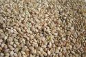 Natural Hulled Sesame Seed