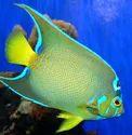 Marine Ornamental Fish