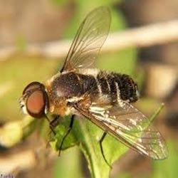 Integrated Fly Management Service