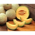 Fresh Honey Melon