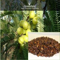 Aonla Fruit Seed (Emblica officinalis ), Packaging Size: 5 kg, Packaging Type: PP Bag