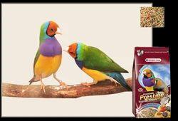 Tropical Finches Premium