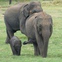 Elephant Safari Tour Packages