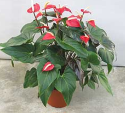 Garden Plant in Thrissur - Latest Price & Mandi Rates from Dealers
