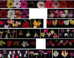 Silk flower reshmi phool manufacturers suppliers we are manufacturing various designs of silk flowers from pure silks we also exporting these flowers to usa mightylinksfo