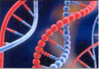 DNA-ID Check