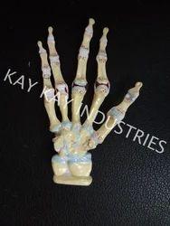 Hand Arthritis Models