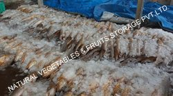 Cold Storage For Fish