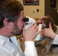 Pet Ophthalmology Service