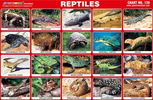 Reptiles Chart, Animals And Birds Charts | Sion, Mumbai | Skylark ...