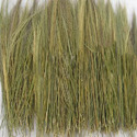 Broom Grass