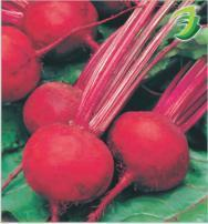 Beet Root-Ruby Queen