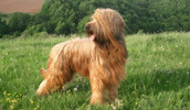 General Treatment In Pet Animals