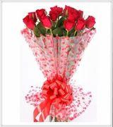 Enchanting Red Rose