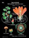 Taxonomy Families