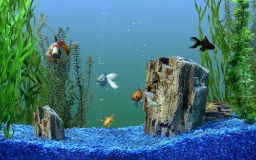 Blue Pebble Chips, Packaging Type: Pp Bag ,  for Aquarium