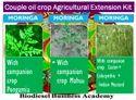 Moringa Couple Oil Crop Extension Kit