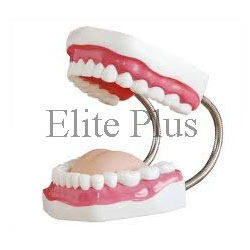 Dental Care Models