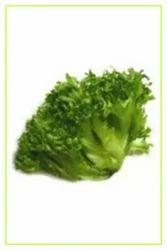 Iceberg Lettuce  Leafy