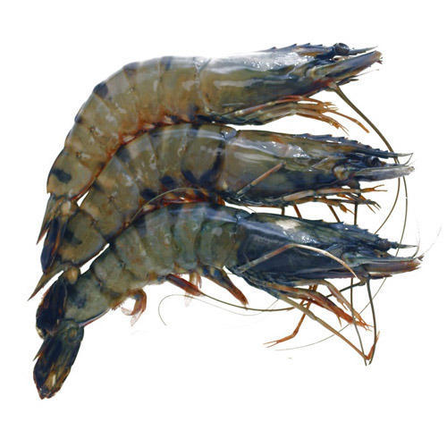 Black Tiger Prawns in Kolkata - Latest Price & Mandi Rates