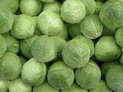 Hybrid Cabbage  Gen 1170