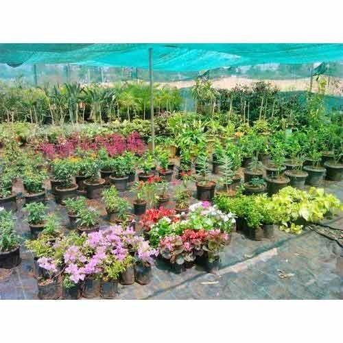 Nursery Plants Decorative Plant Manufacturer From Pune