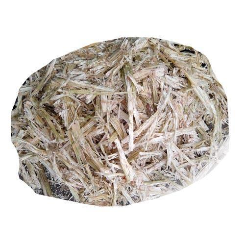 Sugarcane Bagasse at Best Price in India