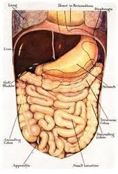 Liver Function Analysis