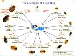 Bug-cill Service