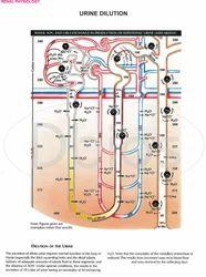 Medical Physiology Charts
