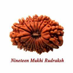 Nineteen Mukhi Rudraksha