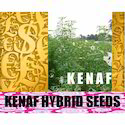 Kenaf Elite Viable Seeds