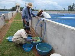 Orissa Fish & Shrimp Technologies - Service Provider of Site