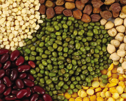 Organic Pulses And Lentils
