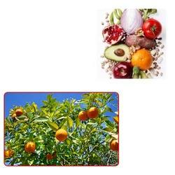 Fruit Seeds for Agriculture
