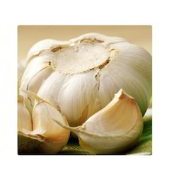 Herbo Nutra Garlic Extract, Pack Size: 1 Kg, Packaging Type: Hdpe Drum