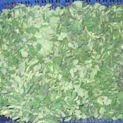 A Grade Green Fenugreek, 3 Kg, Is It Dried: Mo
