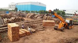 Teak Wood Logs-Timber Wooden
