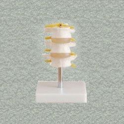 Lumbar Set (3Pcs) Models