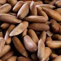 Chilgoza Nuts Chilgoza Without Cover Wholesale Trader