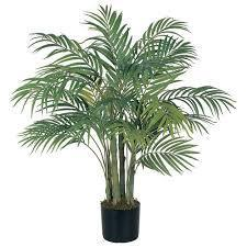 Indoor Natural Plants