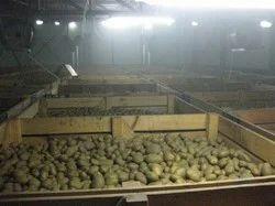 Cold Storage for Potato