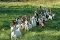 Goat Farming Project Consultants